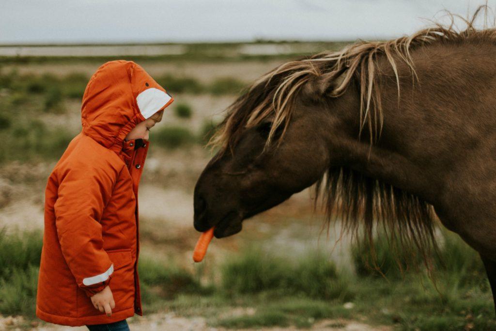 Barn fodrer hest med gulerod