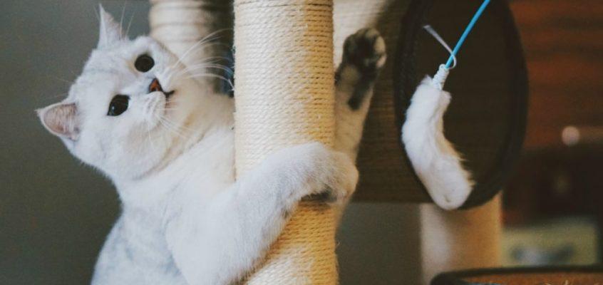 De bedste kattetræer