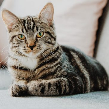 Pris på kattefoder