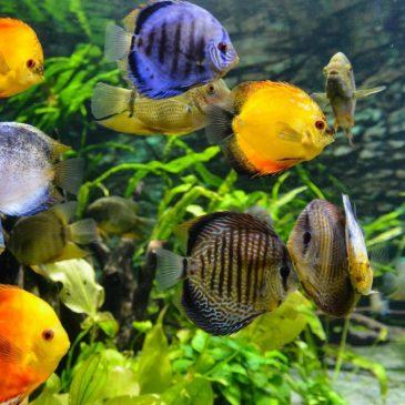 Fiskefoder – alt du skal vide for ikke at være på dybt vand