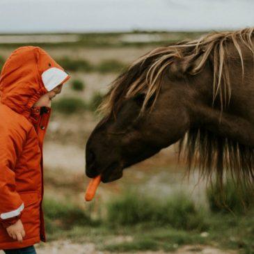 Heste og børn – Lær om glæde og respekt ved ridning
