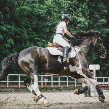 Hestefoder – en introduktionsguide