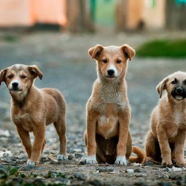 Hunde: Alt du bør vide om hunde