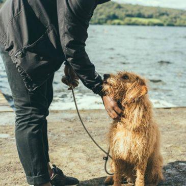 Hundeforsikring – hvad skal man være opmærksom på?