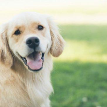 Hundemad – alt du bør vide