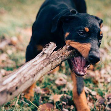 Hundeskove i Danmark – Se de mest populære her