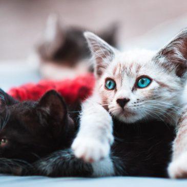 Kat: Alt du bør vide om katte og katteracer