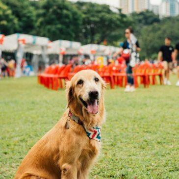 Pris på hundefoder: Sammenlign gratis priser
