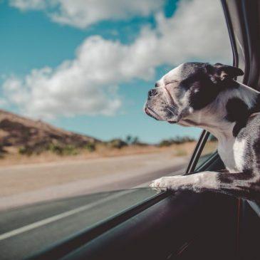 Sådan får du din hund til at elske køreture