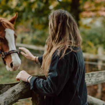 Hestebudget: Få styr på økonomien ved at have hest