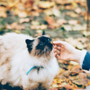 Kattefoder – Overblik og alt du bør vide