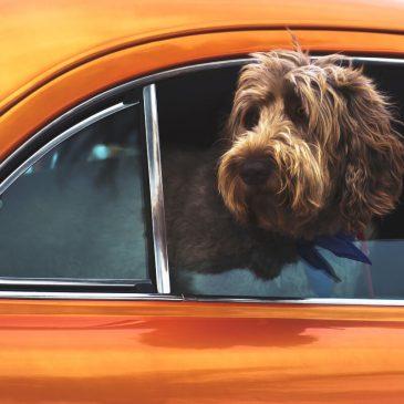 Sikkerhed med en hund i bilen